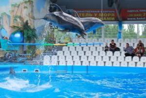 МБФ «Центр социальных проектов будущего» и CityCommerce Bank вместе познакомили детей с морскими котиками и дельфинами