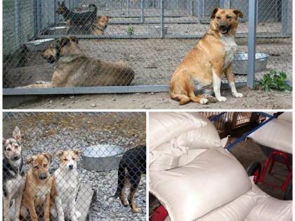 450 кг корма для животных из «Приюта для животных» (пгт. Бородянка)