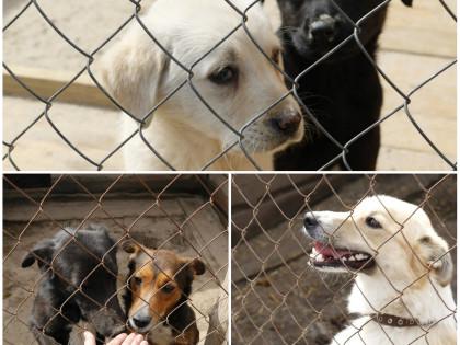Помощь приюту для бездомных животных «Сириус»