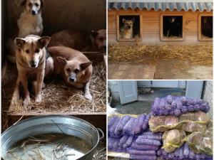 Помощь для «Приюта для животных» с. Новое Залесье, Киевской обл.