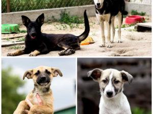 Помощь Гостомельскому приюту для животных