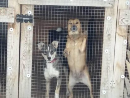 Корм для животных в Зооцентре «Ковчег»
