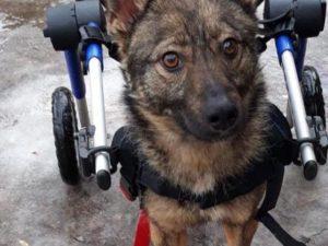 Ошейники и поводки для собак в Приюте (г. Запорожье)